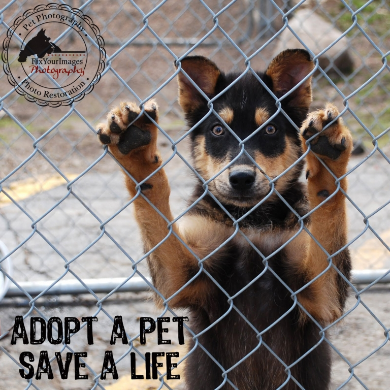 Adopt Dog Shelter Near Me