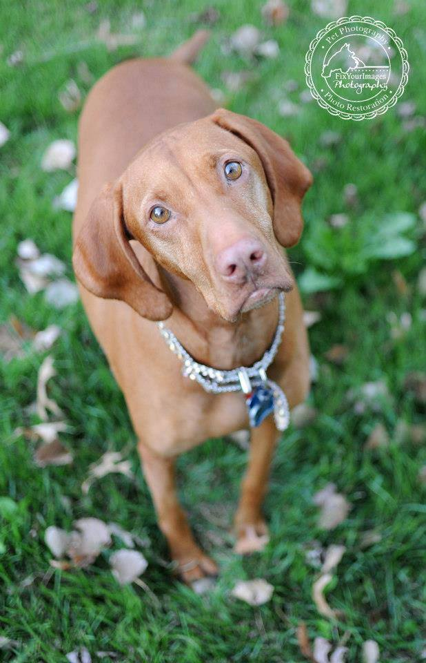 Managing Kidney Disease Chronic Renal Failure In Dogs Providing Proper Diet And Care Kansas City Dog Pet Photography By Jennifer Starr
