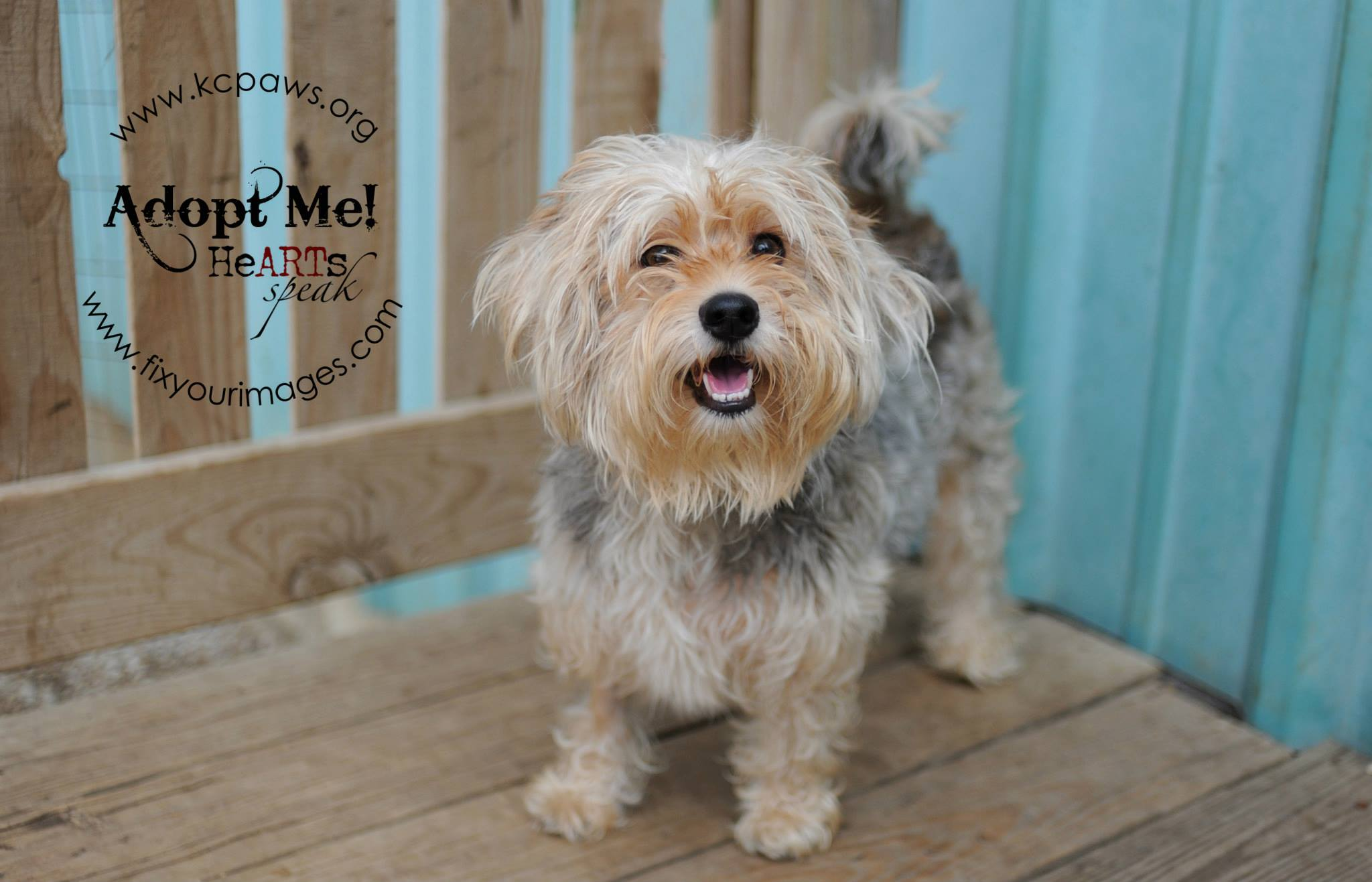 Photographing Dogs For Adoption