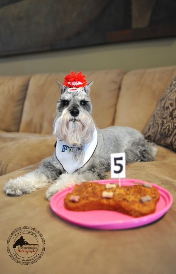 Happy 5th Birthday Remington Homemade Dog Cake Recipe Lilly Of The Valley Elite Handmade Sock Monkey Hats