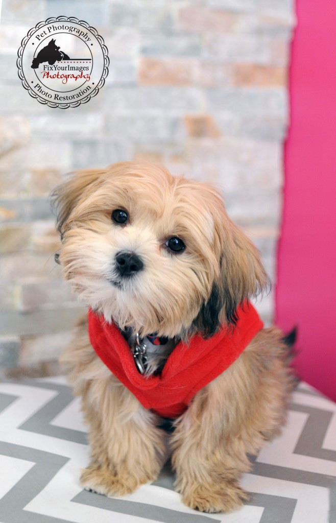 3b9d6a940bad Holiday Photos of your Pet   Woof Gang Bakery   Grooming in Overland ...