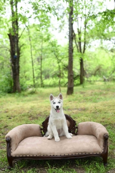 Olathe Pet Photography